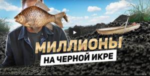 Производство черной икры. Почему икра такая дорогая? Рыбалка в Астрахани